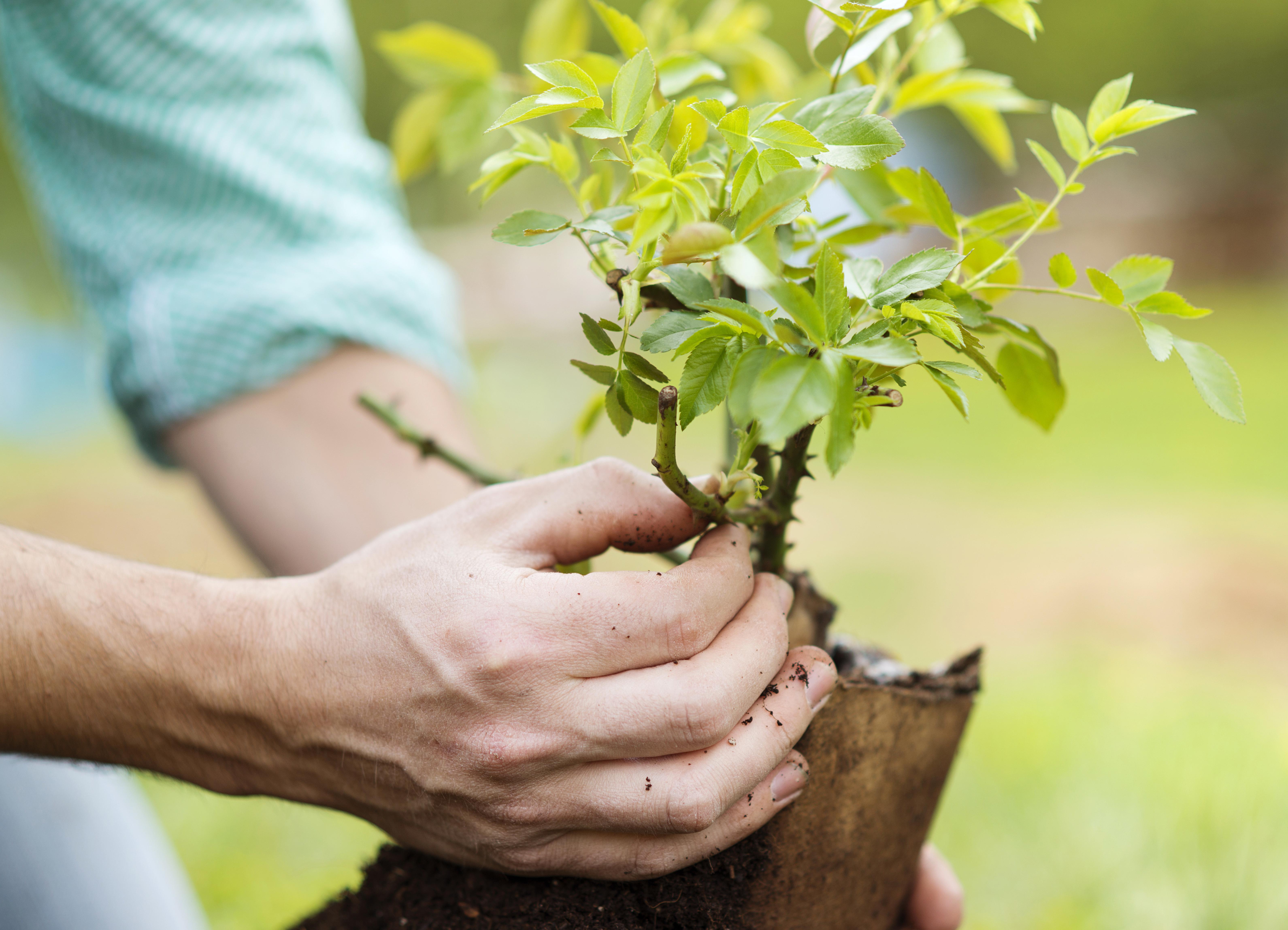 Gartenarbeit Jeder kann es lernen