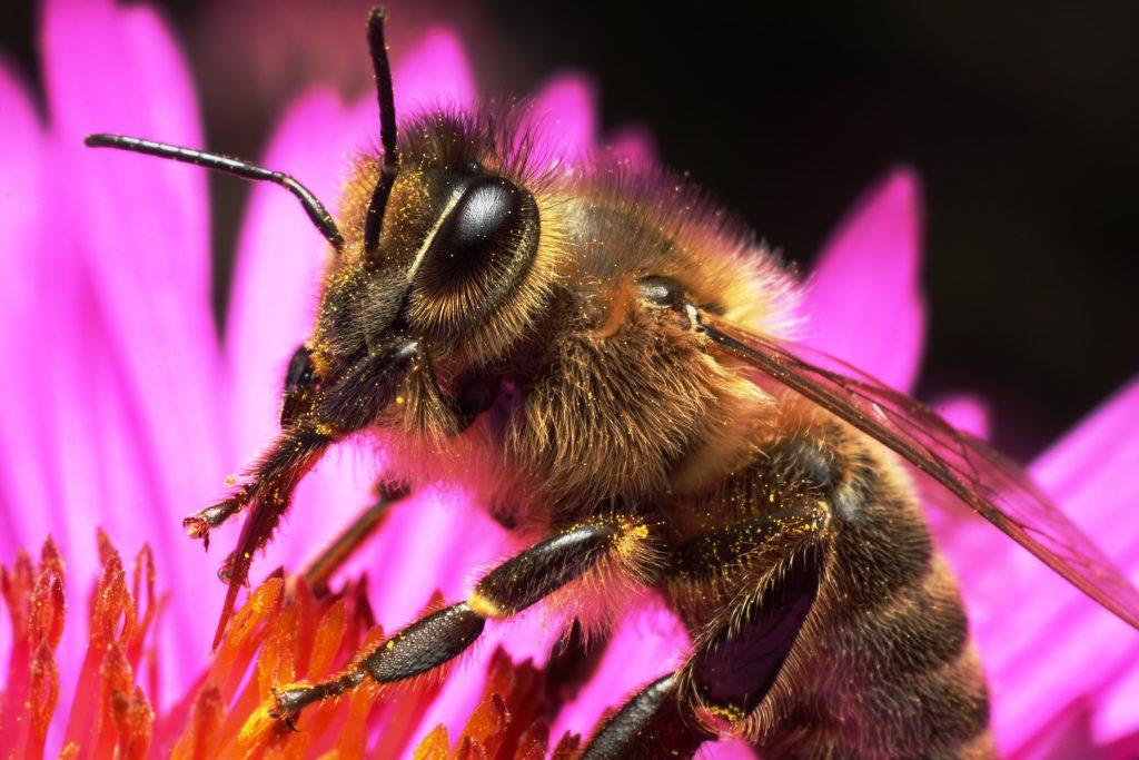 Wespen fernhalten, Bienen